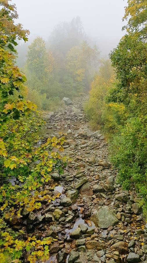 有雾的河 免版税库存照片
