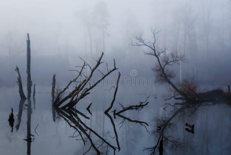 有雾的沼泽 库存图片