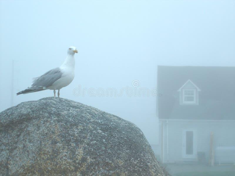 有雾的海天 库存图片
