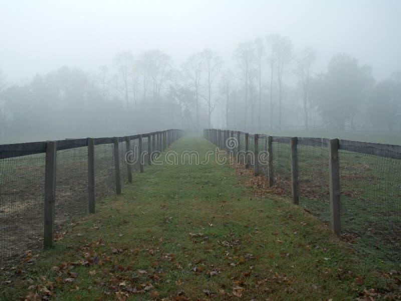 有雾的牧场地 免版税库存图片