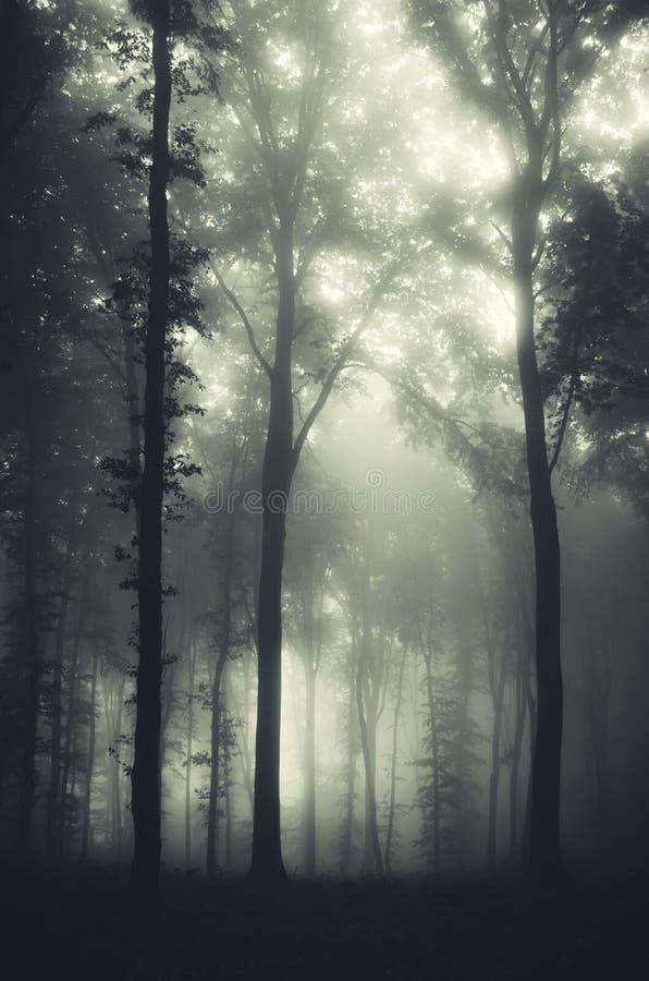 有雾的神奇万圣夜令人毛骨悚然的森林 免版税库存图片