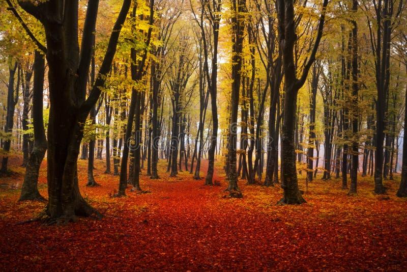 有雾的神秘的森林 免版税库存照片