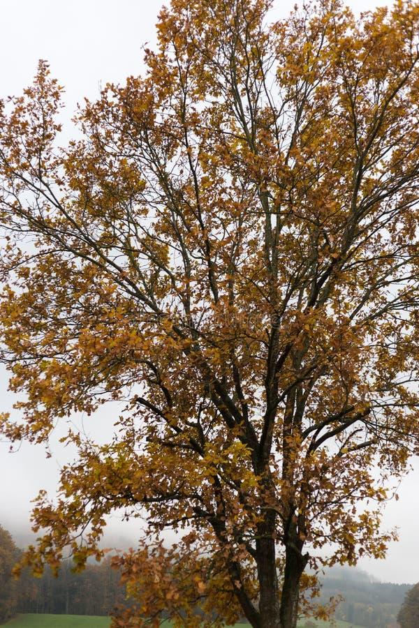 有雾的秋天树和叶子 免版税库存图片