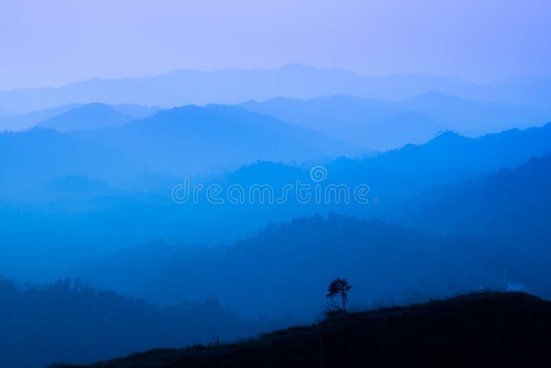 有雾的秋天森林谷,神秘的谷背景风景  在早晨雾的松树剪影,蓝色 免版税库存照片