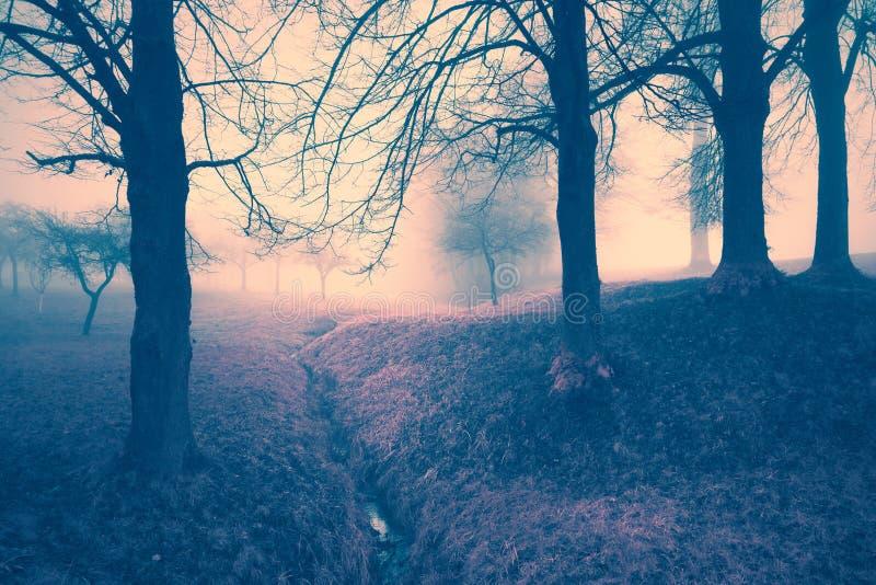 有雾的童话树幻想背景 免版税库存照片