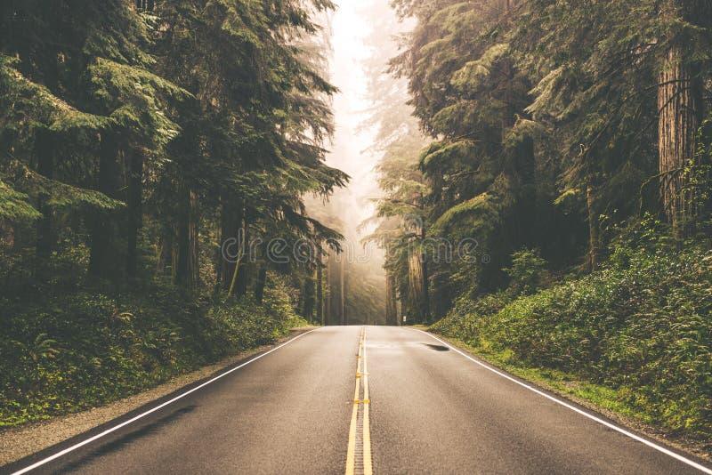有雾的红木高速公路 库存图片