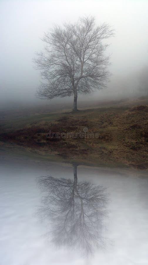 有雾的结构树 库存照片