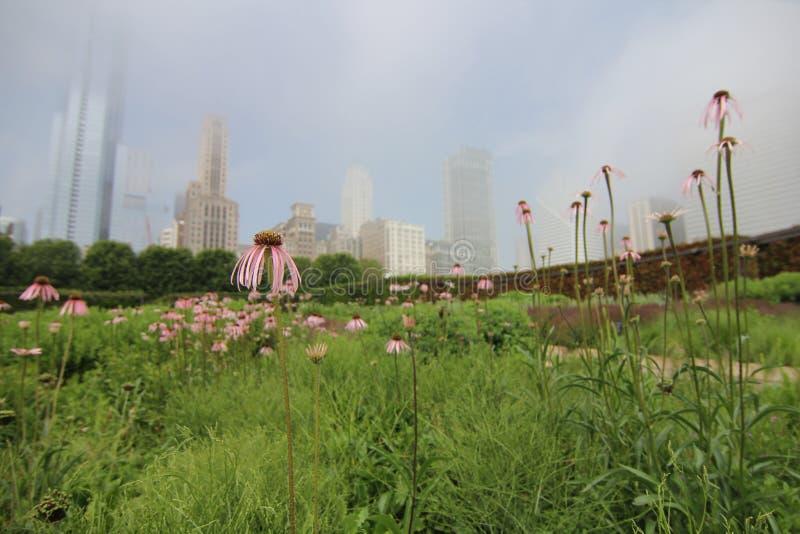 有雾的芝加哥 免版税库存图片