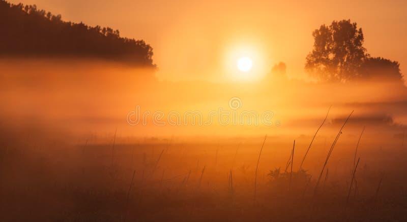 有雾的草甸日出 免版税库存照片