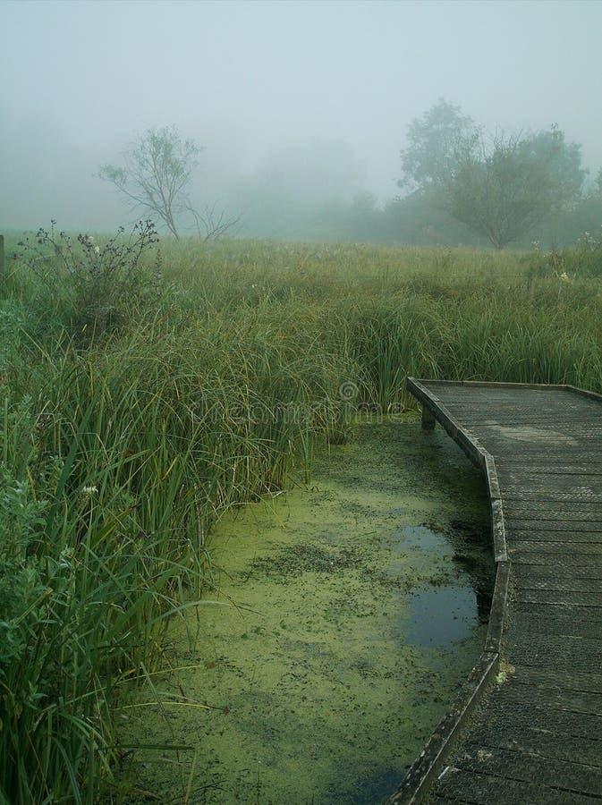 有雾的草甸早晨 免版税库存照片