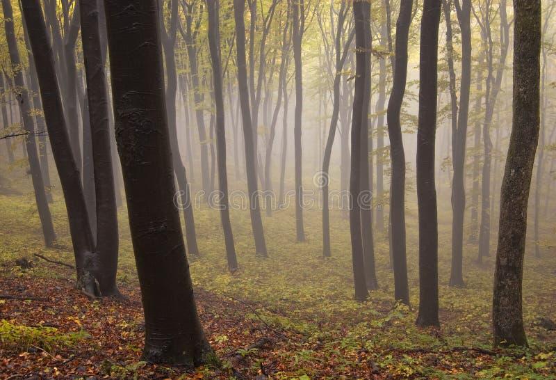 有雾的被迷惑的神秘的森林在秋天 免版税库存图片