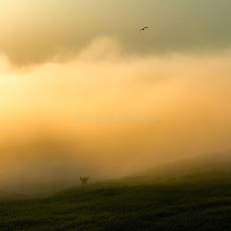 有雾的领域 图库摄影