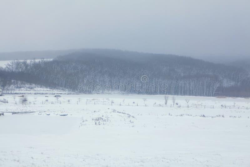 有雾的风景冬天 图库摄影