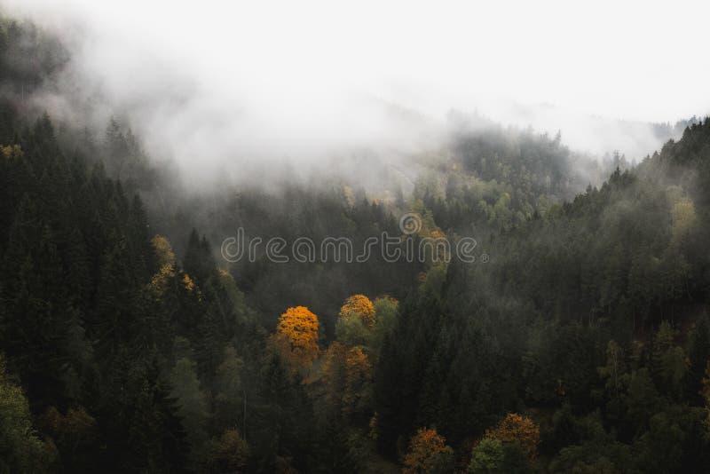 有雾的风景在哈茨山 库存照片