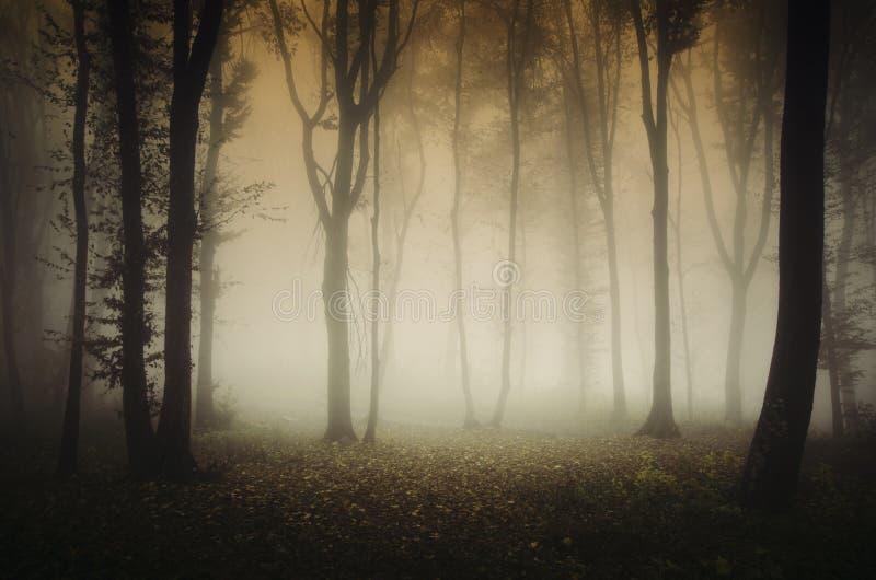 有雾的鬼的令人毛骨悚然的秋天森林 库存图片