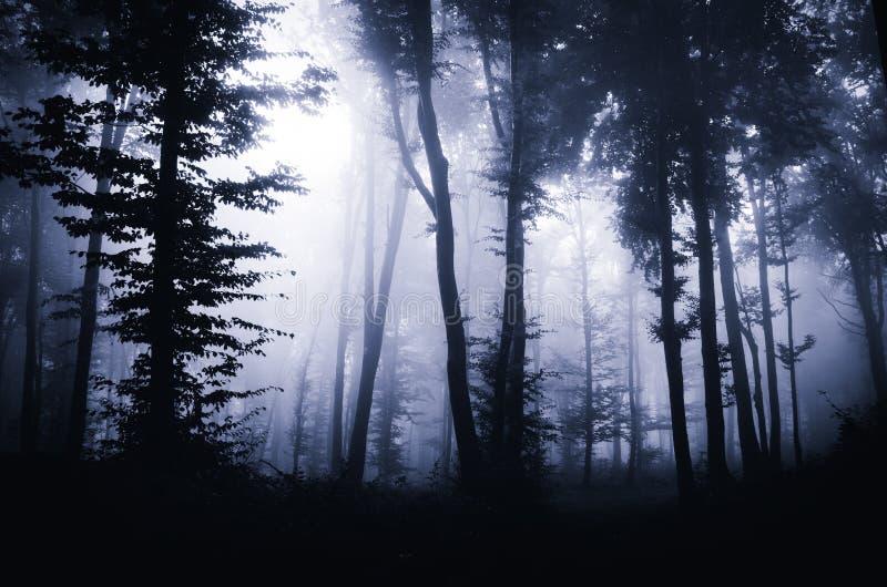 有雾的黑暗的神奇森林在晚上.
