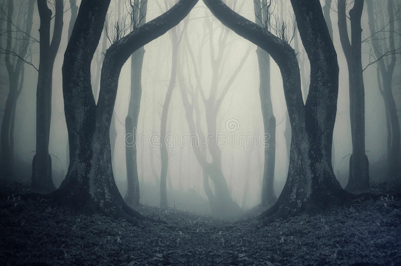 有雾的黑暗的森林和symmertical巨大的奇怪的树在万圣夜 免版税库存照片