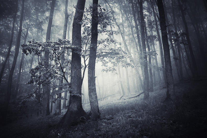 有雾的黑暗的令人毛骨悚然的森林在晚秋天 免版税库存照片