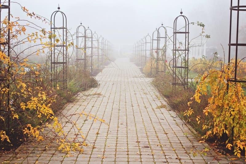 有雾的11月天在公园 免版税库存照片