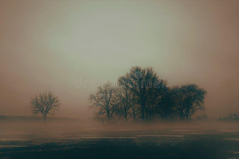 有雾的Treeline 免版税库存照片