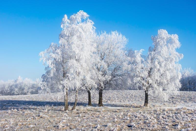 有霜的树树丛 库存照片