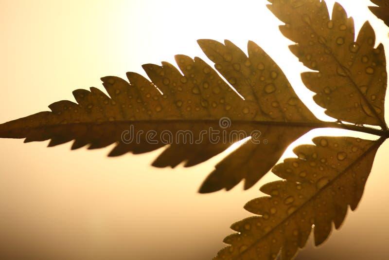 有露滴的叶子在秋天 库存照片