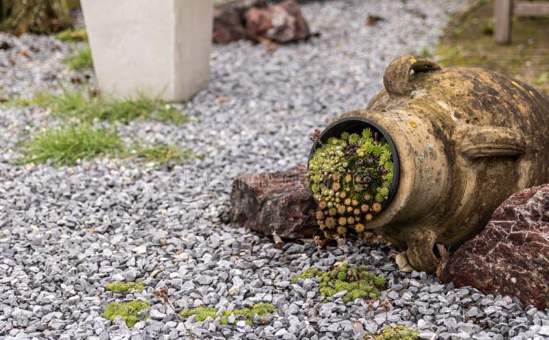 有青苔的古老庭院在花瓶 图库摄影