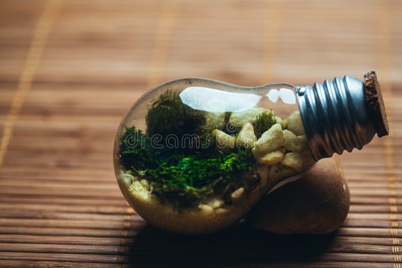 有青苔的在电灯泡的玻璃容器和石头在木背景 免版税库存照片