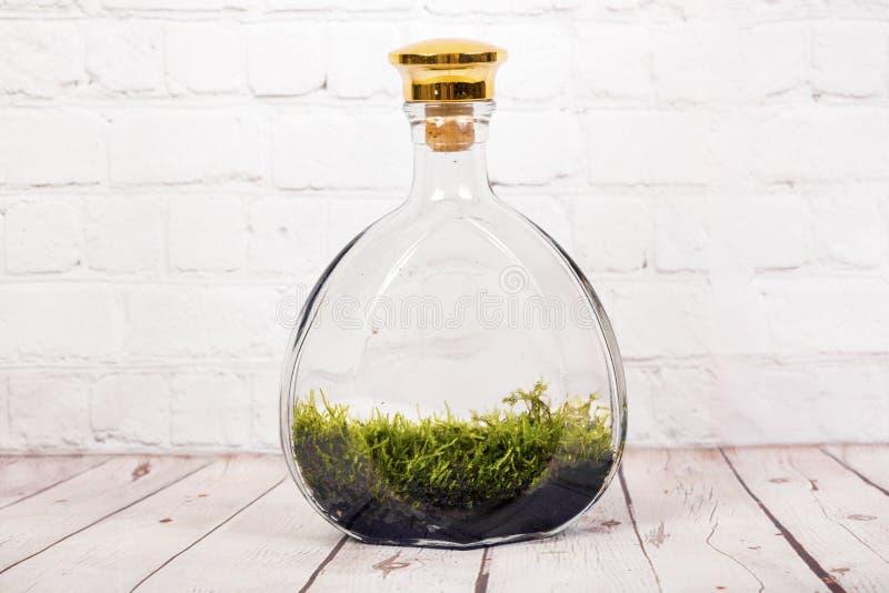 有青苔的瓶玻璃容器 免版税库存照片