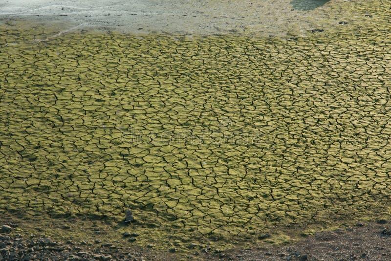有青苔的Dryed湖表面上 免版税库存图片