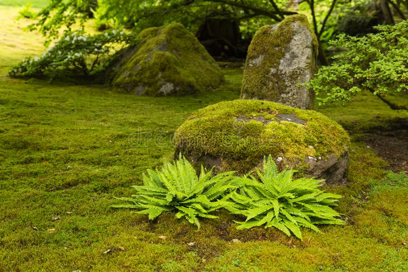 有青苔被盖的岩石的日本庭院 免版税库存照片