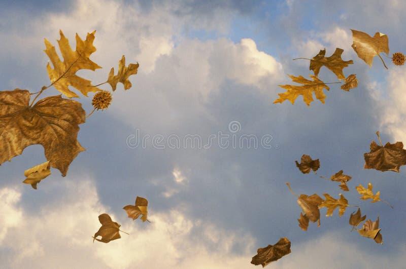 有风吹的叶子的天空 免版税库存照片