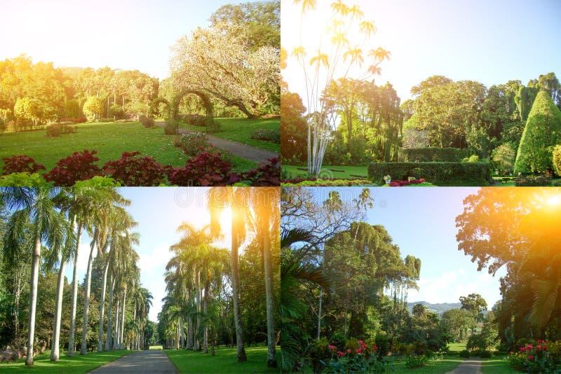 有风景设计的皇家植物园 图库摄影