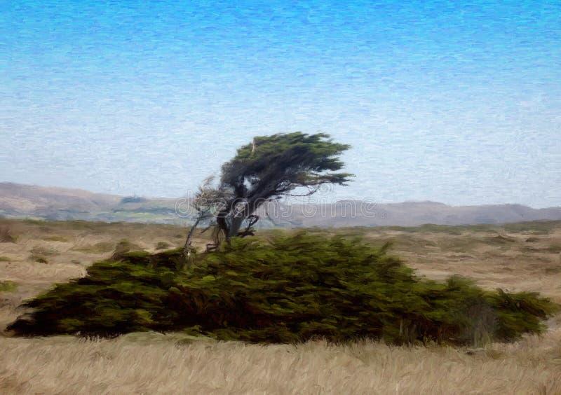 有风海岸的结构树 库存图片