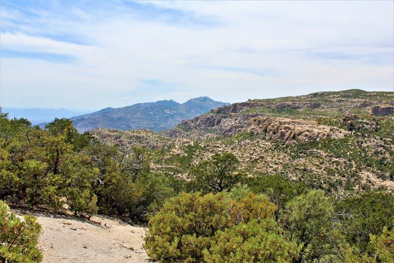 有风点景色,登上莱蒙,圣卡塔利娜山,林肯国家森林,图森,亚利桑那,美国 免版税库存照片