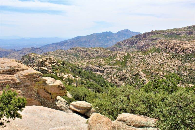 有风点景色,登上莱蒙,圣卡塔利娜山,林肯国家森林,图森,亚利桑那,美国 免版税库存图片