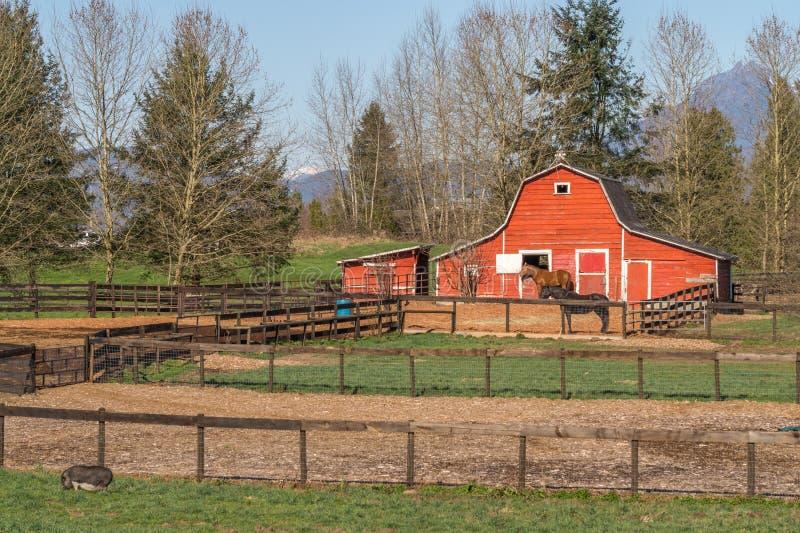 有马和大腹便便的人猪的红色谷仓 免版税图库摄影