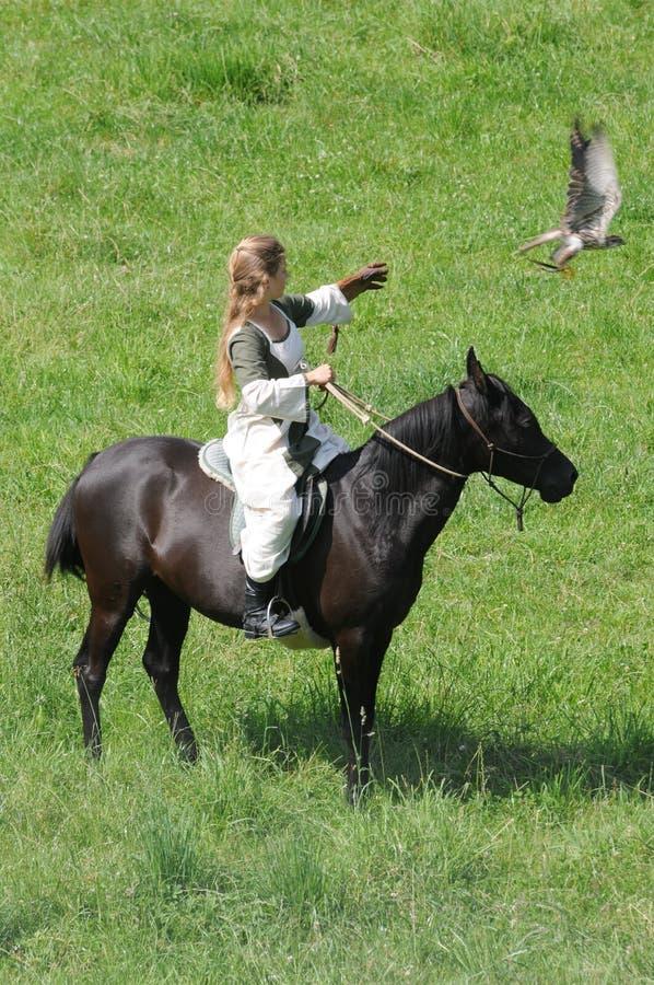 有马和猎鹰的少妇 库存图片