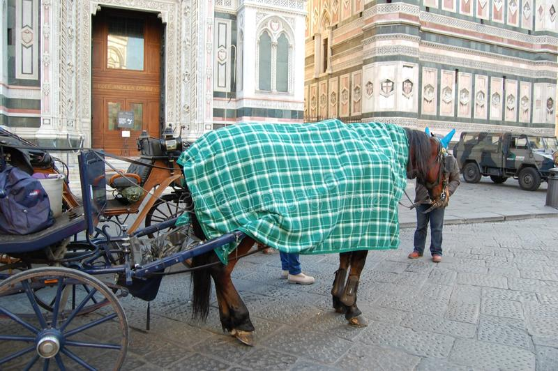 有马的一个推车和出租车司机等待游人,佛罗伦萨,意大利 库存照片