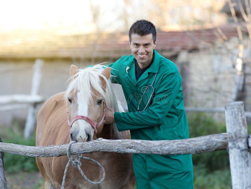 有马的兽医 库存照片