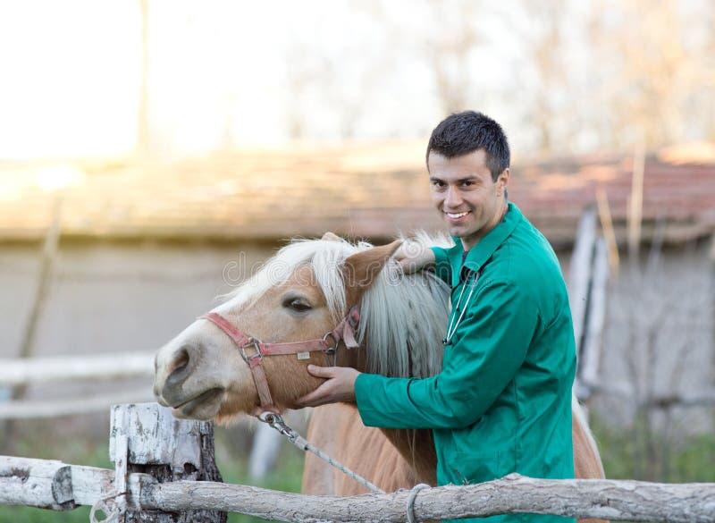 有马的兽医 免版税库存图片