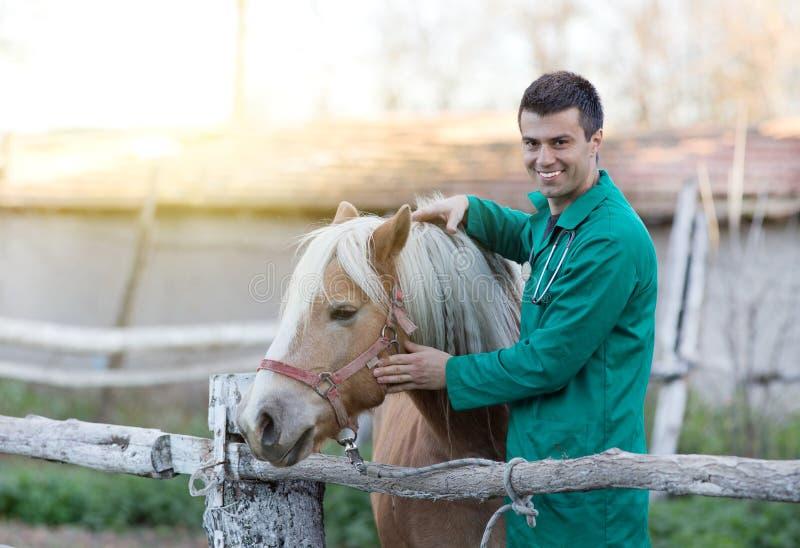 有马的兽医 库存图片