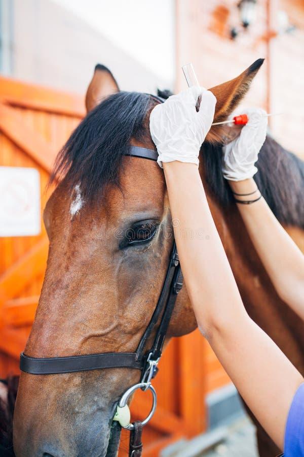有马的少妇 图库摄影
