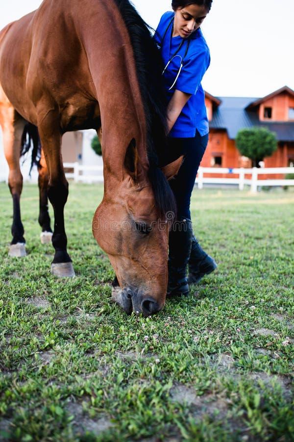 有马的少妇 免版税图库摄影