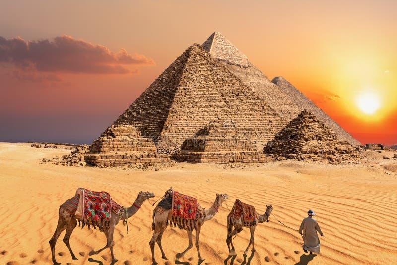 有骆驼的流浪者在吉萨棉前面著名金字塔的日落沙漠  免版税库存照片