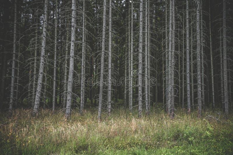 有高凋枯的树的鬼的黑暗的森林 免版税库存图片