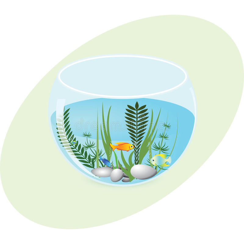有鱼和植物的水族馆 库存照片