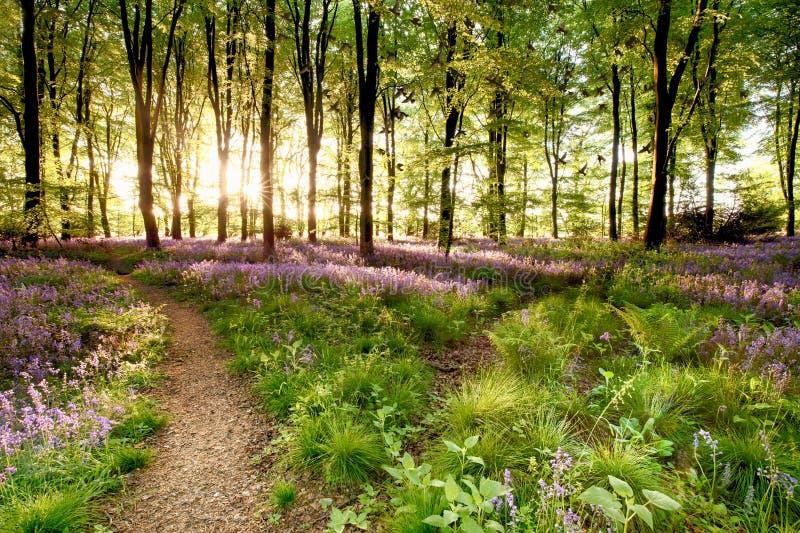 有鸟聚集的会开蓝色钟形花的草森林 库存图片