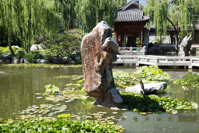 有鸬鹚的中国庭院荷花池 免版税图库摄影