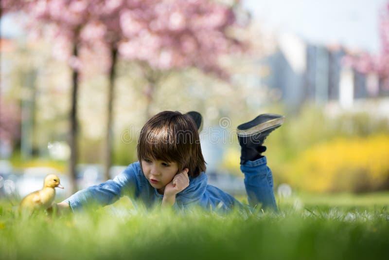 有鸭子春天的逗人喜爱的小男孩,一起使用 免版税库存图片